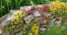 Designing a rock garden – useful tips, ideas and examples - Bepflanzung Potted Plants Patio, Rock Garden Plants, Garden Stones, Garden Planters, Landscaping With Rocks, Backyard Landscaping, Amazing Gardens, Beautiful Gardens, Plant Troughs