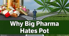 """Marijuana is a Schedule 1 controlled substance, defined as drugs having a """"high potential for abuse"""" and """"no acceptable medical use in treatment."""""""