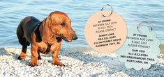 DIY Craft - Vacation Dog Tags Temporary ID for travelling pups Pet Id Tags, Dog Tags, Diy Projects For Dog Lovers, Custom Pet Tags, Dog Varieties, Foster Dog, Dog Id, Dog Crafts, Your Dog