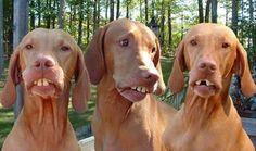 braces maybe?
