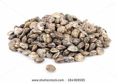 Raw lupin clams over white background. by eZeePics Studio, via Shutterstock
