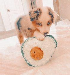 Super Cute Puppies, Baby Animals Super Cute, Cute Baby Dogs, Cute Little Puppies, Cute Dogs And Puppies, Cute Little Animals, Cute Funny Animals, Doggies, Aussie Puppies