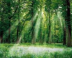 see the light through the trees