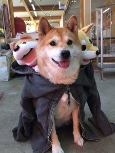 Shiba Inu costume