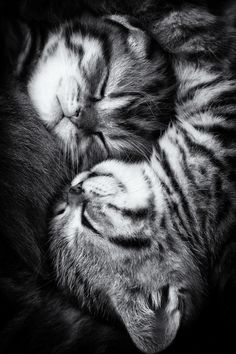 Kitty snuggles
