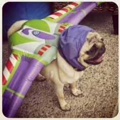 cosplay toy story buzz lightyear pug dog costume