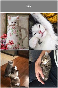kittens Cutest Kittens Cutest, Cats, Animals, Gatos, Animaux, Animales, Cat, Kitty, Animal
