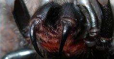 Cómo tratar de forma natural una picadura de araña