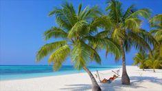 Kuredu Island Resort and Spa Kuredu Maldives, Kuredu Island, Maldives Islands, Water Villa, Beach Bungalows, Couple Beach, Beach Villa, Windsurfing, Island Resort