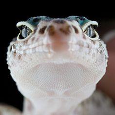 Here lizard...lizard...lizard...