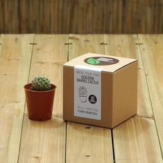 Golden Barrel Cactus Kit by PlantsFromSeed on Etsy