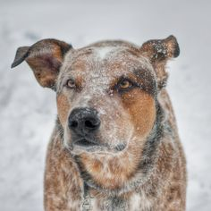 Dog sprinkled lightly coated in snow.