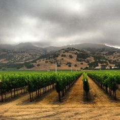 @napavalleyinc Low hanging clouds in the valley this morning. Hard to believe its supposed to burn off and get up to 80 degrees today!