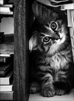 Cute kittens only Pretty Cats, Beautiful Cats, Animals Beautiful, Pretty Kitty, Cute Baby Animals, Animals And Pets, Funny Animals, Funniest Animals, Animals Images