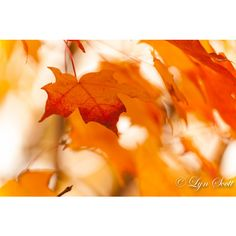 Fall Leaves Nature, landscape photography, fall, autumn, abstract,... ($25) ❤ liked on Polyvore featuring home, home decor and wall art