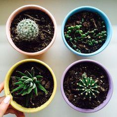 Afbeeldingsresultaat voor tumblr succulents