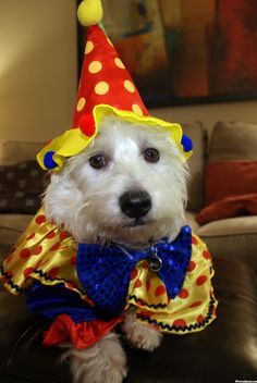 preston clown - Wayfair Halloween Dog Costumes | PrestonSpeaks.com