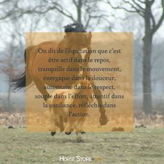 Moving On Quotes Letting Go, Quotes About Moving On, Plus Belle Citation, Horse Riding, Therapy, Horses, Let It Be, Life, Animals