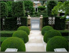 boxwood globes and hedges - never go out of style