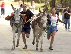 10 Toughest & Craziest Races In The World admin Fri, - Image Section Dangerous Tags extreme sports Pages Title 10 Toughest & Craziest Races In The World Description Call them crazy, but there are certain p Donkey Rescue, A Donkey, Race Around The World, In This World, American Wives, Zombies Run, Horse Quotes, Local Events, Gold Rush