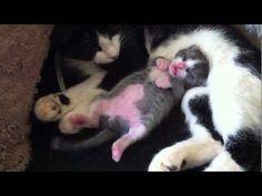 Sleeping Dancing Kitty