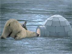 Polar Bear condo