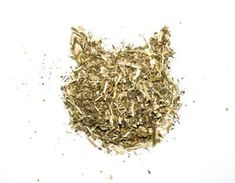 Catnip Drying Tips: Can You Dry Catnip Herb For Later Use Drying Catnip Leaves – … Cat Garden, Garden Care, Growing Catnip, Sansevieria Plant, Sansevieria Cylindrica, Catnip Plant, Thyme Essential Oil, Lemon Eucalyptus, Natural Mosquito Repellant