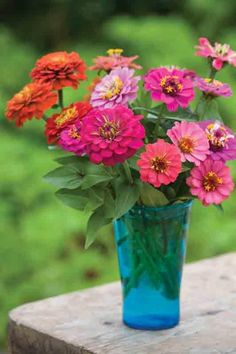 Zinnias- cheerful & simple! The blue vase gives good contrast to the warm colors of the flowers.