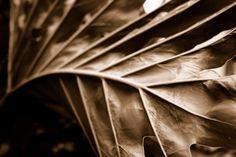 Leaf by ~VivaNickDrake on deviantART