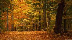 fall animated gif