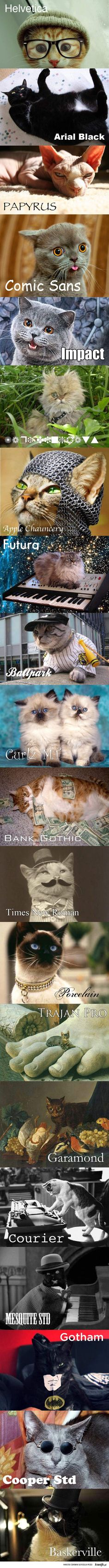 cats with their fonts :) I will never choose a font again without thinking about a cat