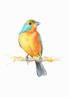 Bird art bird print Watercolor original watercolor by ChiFungW