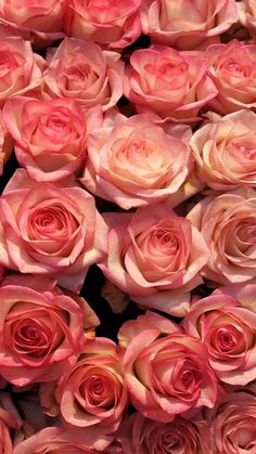 Many pink roses, flowers background iphone Beautiful Flowers Wallpapers, Beautiful Rose Flowers, Amazing Flowers, Pretty Flowers, Pink Flowers, Wallpaper Fofos, Rose Flower Wallpaper, Aesthetic Roses, Rose Background