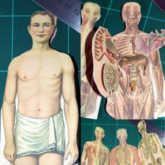 Tektonten Papercraft: Printable Vintage Paper Anatomy Model