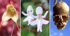 awebic-flores-incriveis