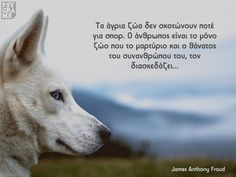 Psygrams Ideas in words Greek Quotes, Dog Quotes, Wise Words, Thoughts, Board, Dogs, Animals, Animales, Animaux