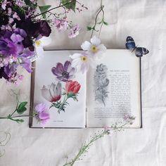 Literature Love Affair