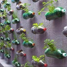 Soda bottle vertical herb garden