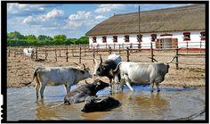 Guvernul Ungariei acordă burse de studiu în agricultură tinerilor din Republica Moldova? Republica Moldova, Mongolia, Romania, Vietnam, Asia, Animals, Europe, Animales, Animaux
