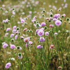 Happy Friday xx #happyfriday #flowers #wheredotheweeksgo #timeflieswhenyourebuildingagarden #nearlythere #imageviapinterest