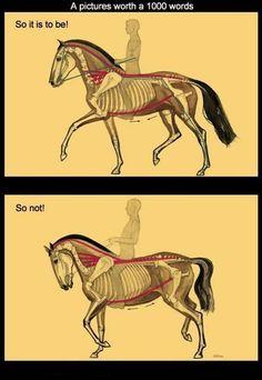 Comparative - correct vs incorrect posture.