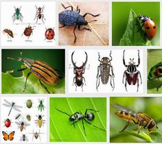 Insects are the biggest group of animals, they are found all over the world, even in frozen lands and in very hot deserts where other animals find it hard to live. Most insects live on their own, but some live in organized communities. - See more at: http://scienceedus.blogspot.com/2014/12/insects-largest-group-of-animal.html#sthash.kcYoOfzW.dpuf