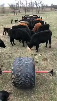 Funny Animal Videos, Funny Animal Pictures, Cute Funny Animals, Farm Animals, Animals And Pets, Hobby Farms, Cool Inventions, Alpacas, Livestock