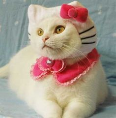 I love pet cats.  I don't know that I'd always dress it as Hello Kitty though.