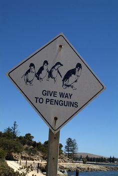 A philosophical look at Penguin. Interesting ideas, but if you're looking for a way out of penguin-purgatory this isn't the post for you.