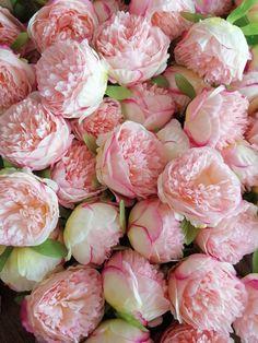 Wedding Flower Decorations, Backdrop Decorations, Flower Garlands, Peonies Wedding Centerpieces, Faux Flowers, Silk Flowers, Beautiful Flowers, Blooming Flowers, Flowers Garden