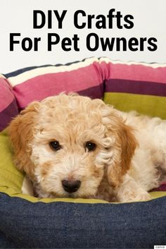 3 Awesome DIY Projects For Pet Owners