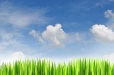 How to grow great grass Growing Wheat Grass, Stop Smoke, Drug Free, Free Therapy, Smoking, Mindfulness, Clouds, Places, Nature