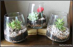 Make Them Wonder: I still heart succulent terrariums
