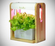 Living Farm Coco Veggie Hydroponic Grow Box The #Living Farm Coco Veggie is a compact little device where you can grow your own herbs and #vegetables at #home and in 40-50 days reap the benefits of your farming ways. This particular box is 380 x 240 x 400 mm in size and weighs 6kg with a power adaptor and LED's designed to last up to 40,000 hours. #Organic #Food #Gadgets ● CoolShitiBuy.com